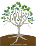 policy-toolkit-tree